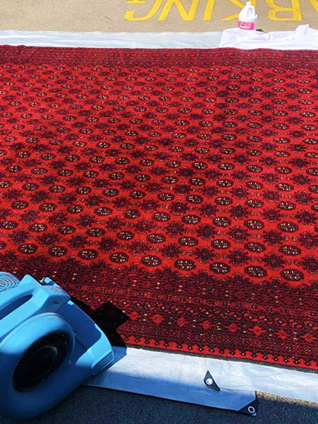 Professional Rug Cleaning Port Macquarie